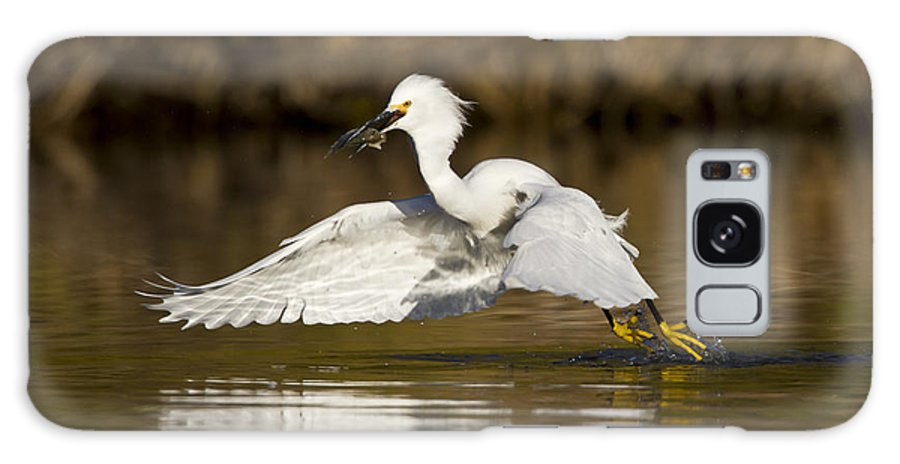 Snowy Egret Galaxy S8 Case featuring the photograph Snowy Egret With Lunch by Bryan Keil