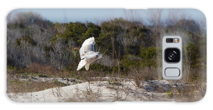 Snowy Owl Galaxy S8 Case featuring the photograph Snowy Owl In Florida 19 by David Beebe