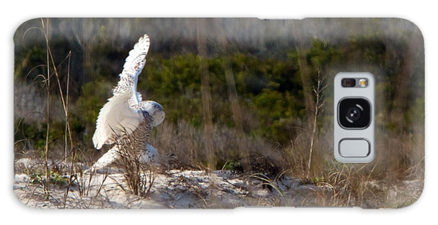 Snowy Owl Galaxy S8 Case featuring the photograph Snowy Owl In Florida 20 by David Beebe
