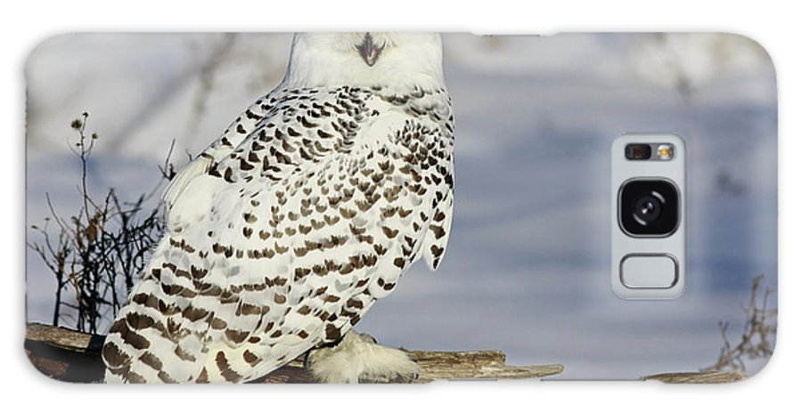 Snowy Galaxy S8 Case featuring the photograph Snowy Owl On A Winter Hunt by Inspired Nature Photography Fine Art Photography