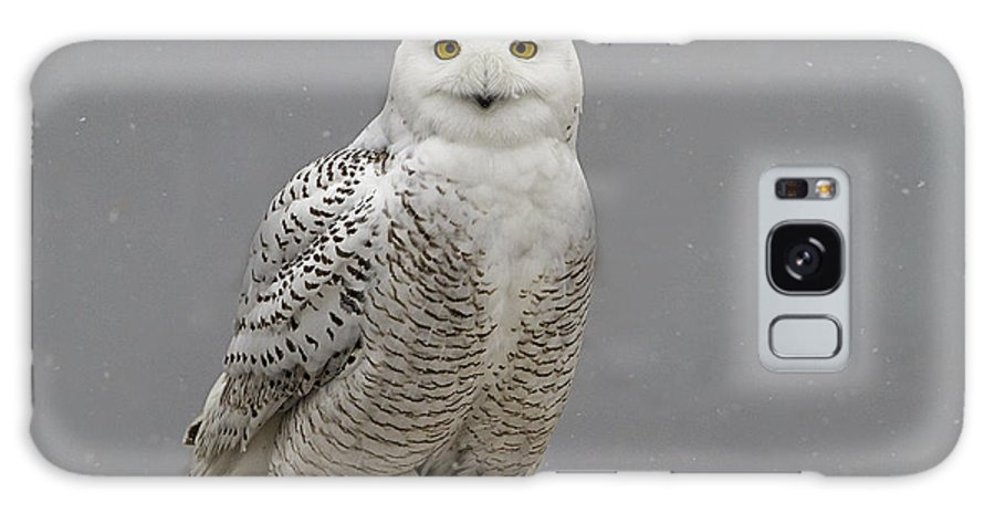 Snowy Owl Galaxy S8 Case featuring the photograph Snowy Owl On An Ice Flow by John Vose