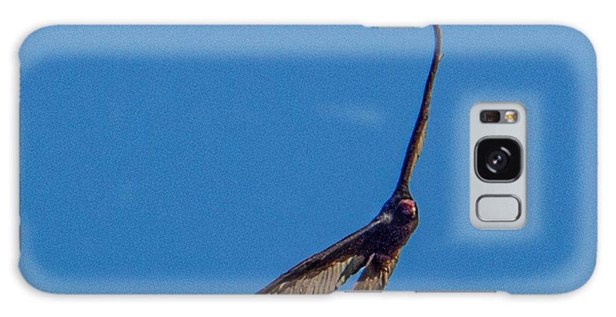 Bird Of Prey Galaxy S8 Case featuring the photograph Soaring In Flight by Wolfgang Hauerken