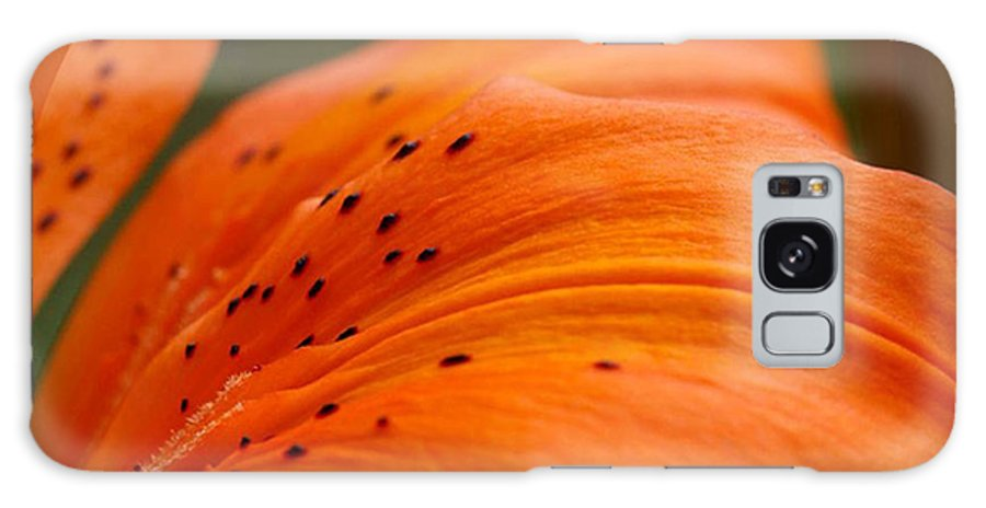 Flower Galaxy S8 Case featuring the photograph Soft Lily by Carol Lynch