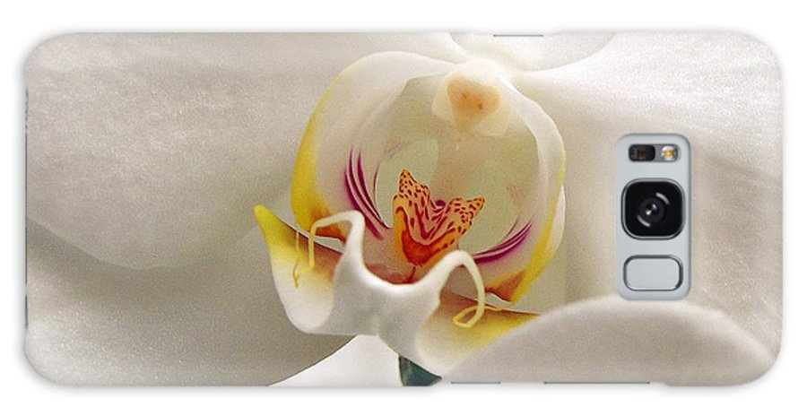 White Orchid Flower Galaxy S8 Case featuring the photograph Soft Orchid by Kathi Mirto