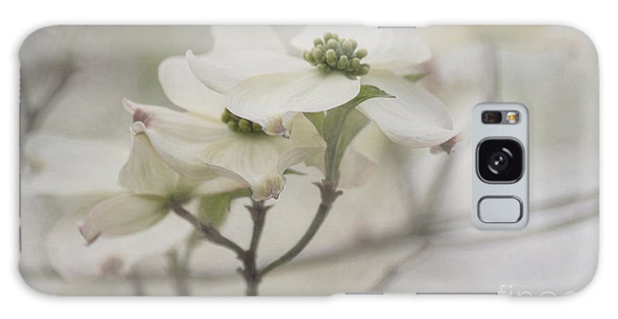 Dogwood Galaxy S8 Case featuring the photograph Soft Texture Of Spring by Arlene Carmel