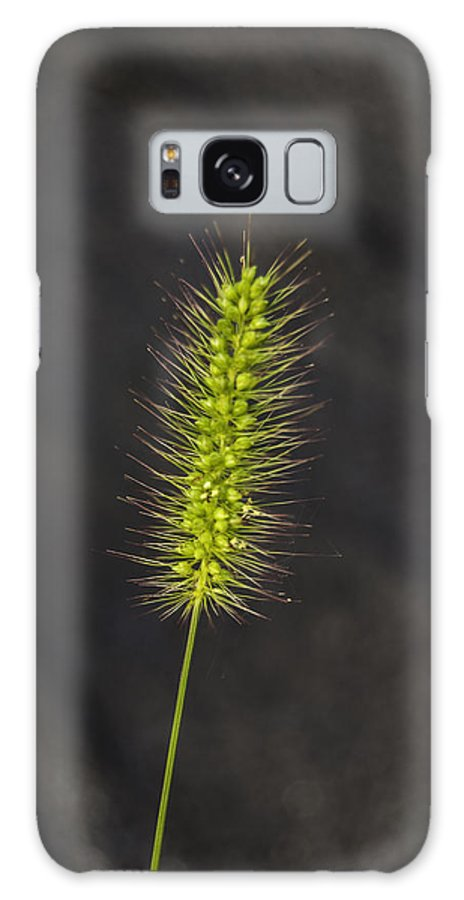 Weed Galaxy S8 Case featuring the photograph Solo by Judy Hall-Folde