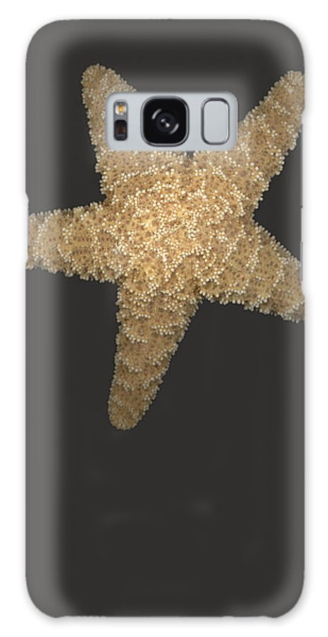 Starfish Galaxy S8 Case featuring the photograph Solo Starfish I by Suzanne Gaff
