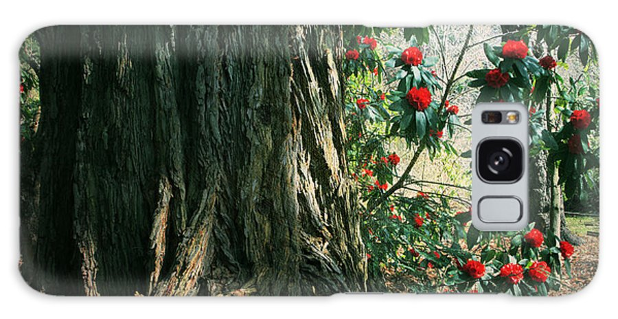 Uc Berkeley Botanical Garden Galaxy S8 Case featuring the photograph Sometimes Life Is Sweet by Laurie Search