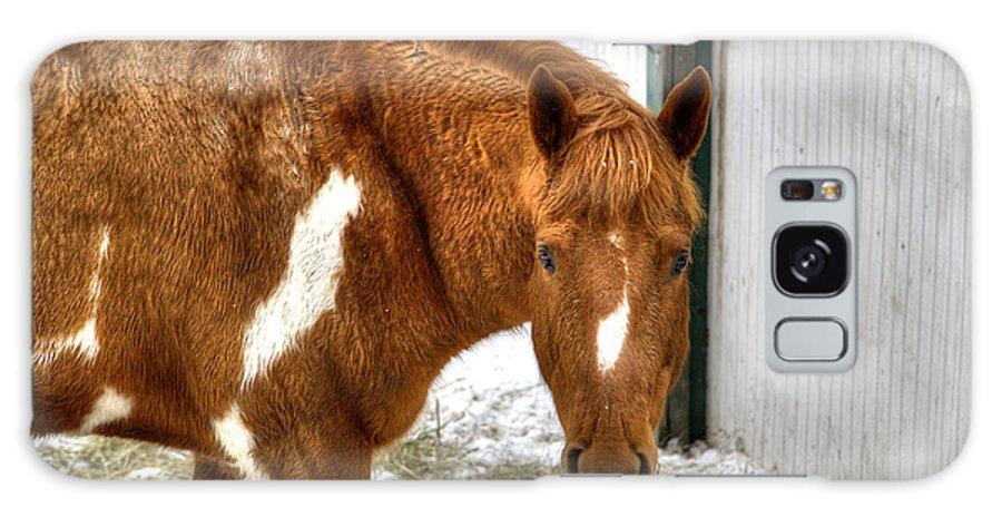 Horse Galaxy S8 Case featuring the photograph South Barrington Horse 2 by Deborah Smolinske