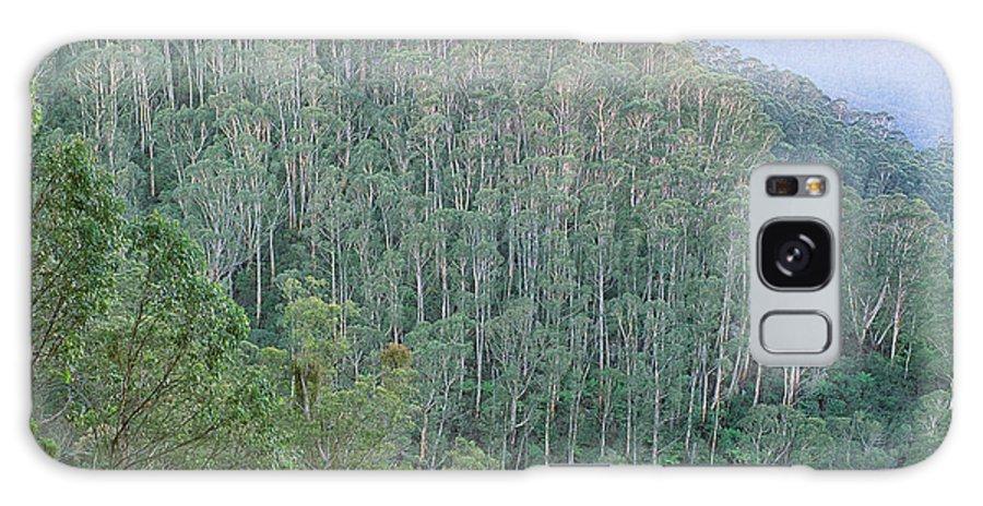 Brown Barrel; Trees; Eucalyptus Fastigata; Tableland; Moist Forest; Vegetation; Bemboka National Park Galaxy S8 Case featuring the photograph Southeast Forest Ridges by Wayne Lawler