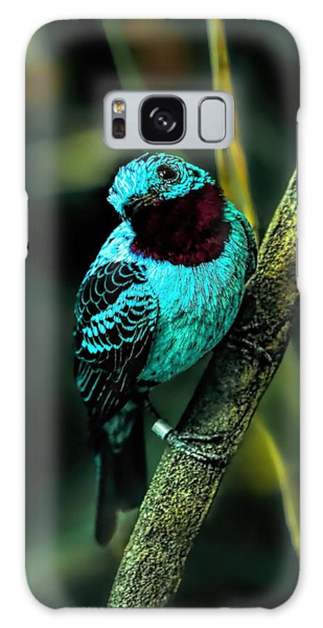 Spangled Continga Galaxy S8 Case featuring the painting Spangled Cotinga Turquoise Bird by Tracie Kaska
