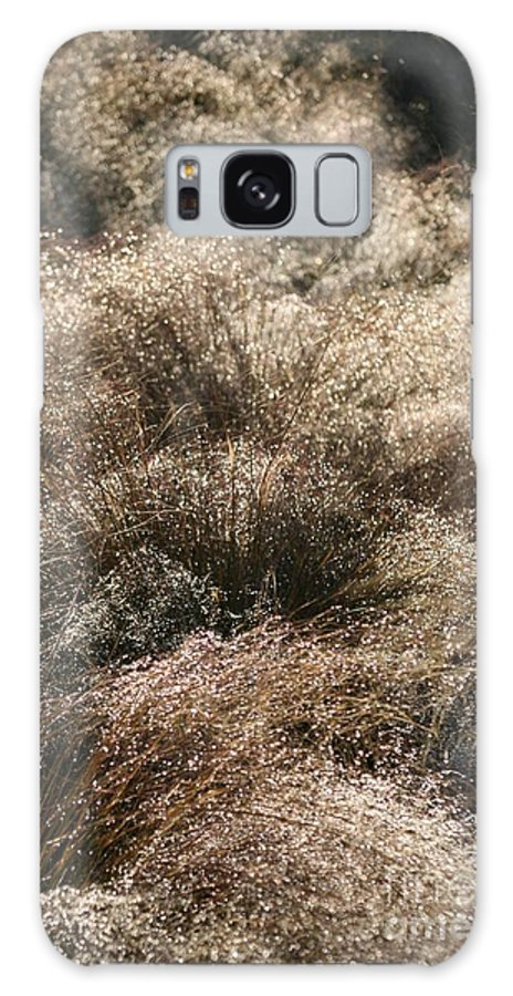 Grasses Galaxy Case featuring the photograph Sparkling Grasses by Nadine Rippelmeyer