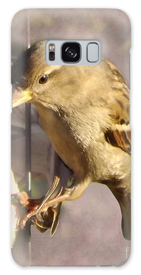 Bird Galaxy S8 Case featuring the photograph Sparrow by Linsey Williams