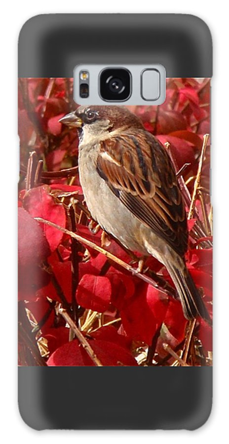 Sparrow Galaxy S8 Case featuring the photograph Sparrow by Rona Black