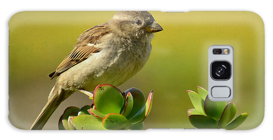 Sparrow Galaxy S8 Case featuring the photograph Sparrow Song 5 by Fraida Gutovich