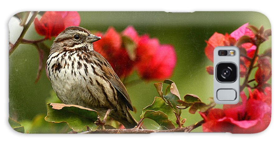 Sparrow Galaxy S8 Case featuring the photograph Sparrow Song 8 by Fraida Gutovich