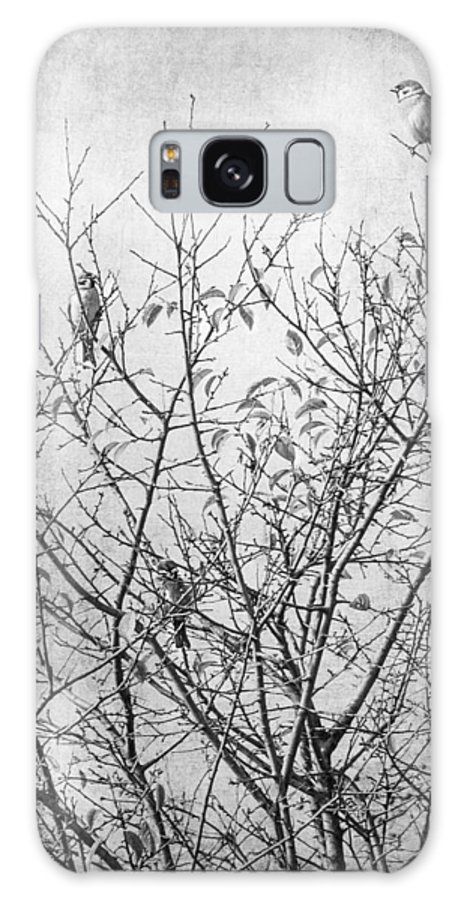 Black And White Photography Galaxy S8 Case featuring the photograph Sparrows by Iliyana Lazarova
