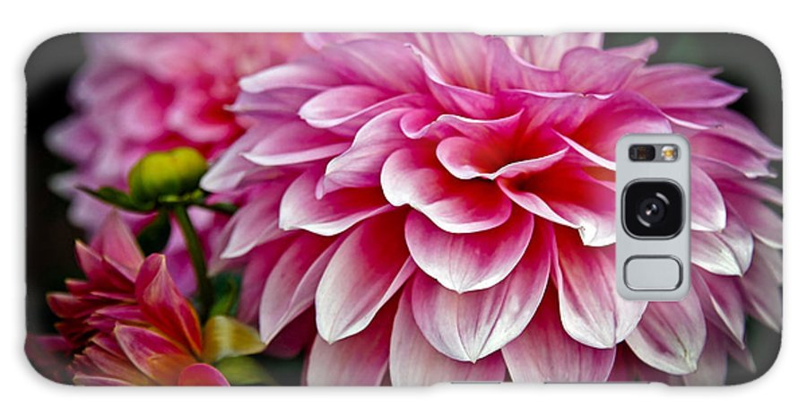 Dahlia Galaxy S8 Case featuring the photograph Special Occasion by Athena Mckinzie