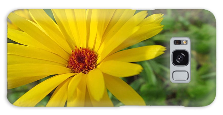 Flowers Galaxy S8 Case featuring the photograph Speckless Yellow African Daisy by Tina M Wenger