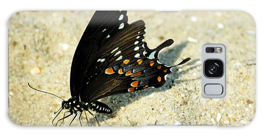 Papilio Troilus Galaxy S8 Case featuring the photograph Spicebush Swallowtail Papilio Troilus by Rebecca Sherman
