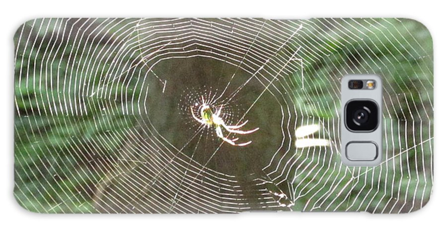 Sunlit Spider Light Spider Sunlight Spider Illuminated Spider Web Light Natural Lightscapes Wild Prints Galaxy S8 Case featuring the photograph Spider Light by Joshua Bales