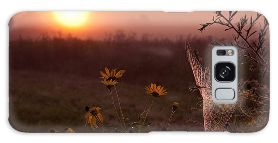 Tree Galaxy S8 Case featuring the photograph Spiderweb And Wildflowers Lit By Morning Sunrise by Brandon Alms