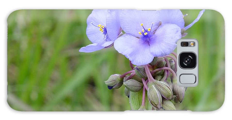 Nature Galaxy S8 Case featuring the photograph Spiderwort by Peggy King