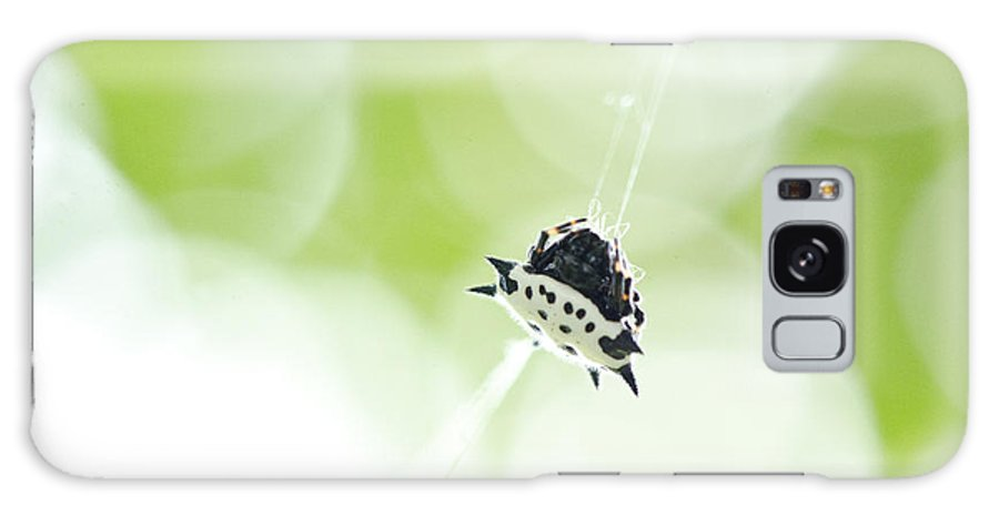 Spider Galaxy S8 Case featuring the photograph Spiney-backed Orb Weaver by Julie Wynn