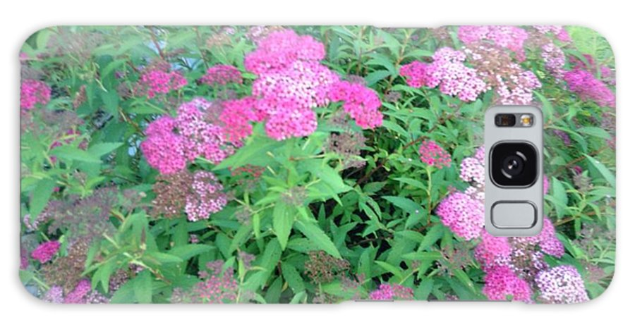 Plant Galaxy S8 Case featuring the photograph Spirea In Bloom by Jessica Ristau