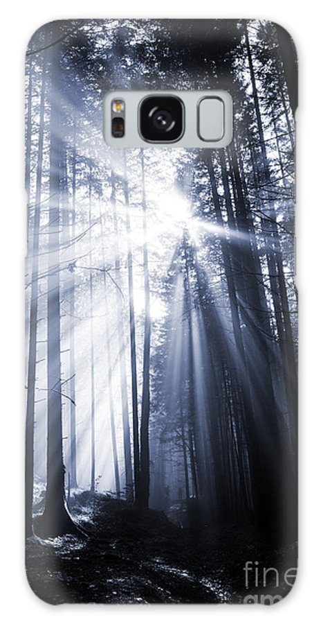 Forest Galaxy S8 Case featuring the photograph Spooky Forest by Florea Marius Catalin