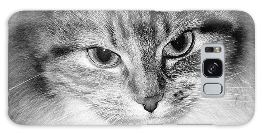 Cat Galaxy S8 Case featuring the photograph Spooleete. Cat Portrait In Black And White. by Ausra Huntington nee Paulauskaite