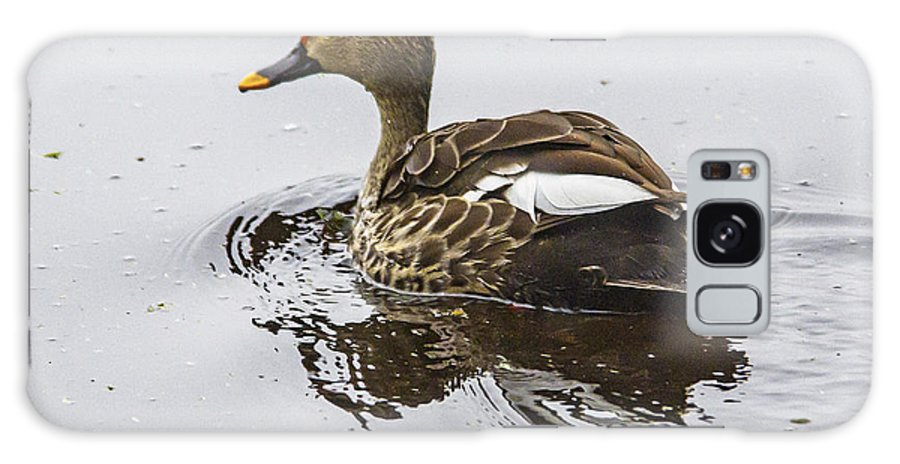 Duck Galaxy S8 Case featuring the photograph Spot-billed Duck by Pravine Chester