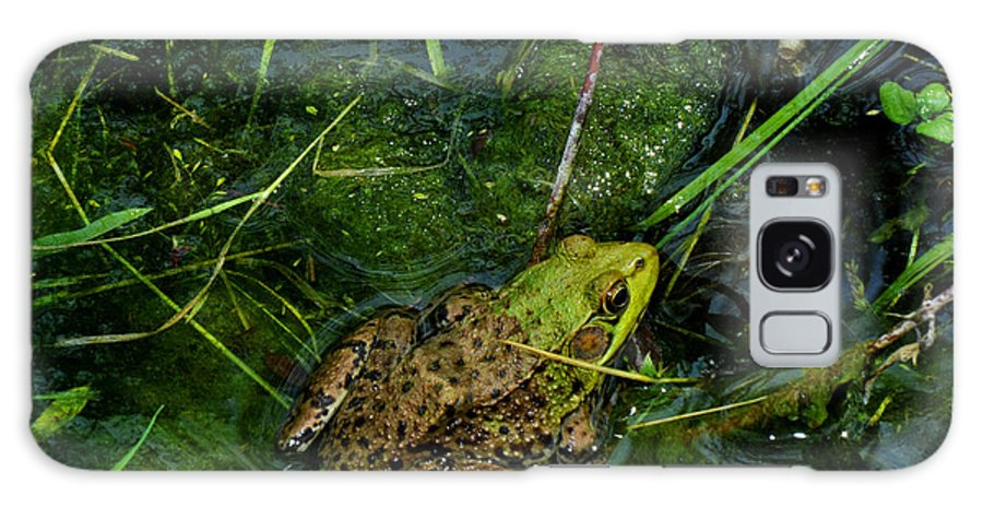 Frog Galaxy S8 Case featuring the photograph Spotted Frog by Diane Lent