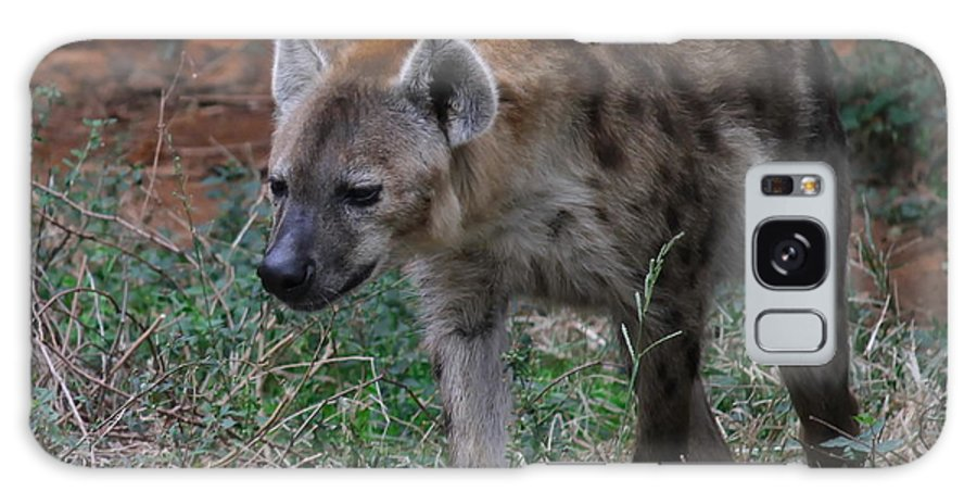 Hyena Galaxy S8 Case featuring the photograph Spotted Hyena by Cathy Lindsey