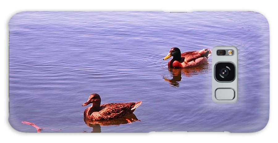 Spring Ducksnature Galaxy S8 Case featuring the photograph Spring Ducks by John Malone