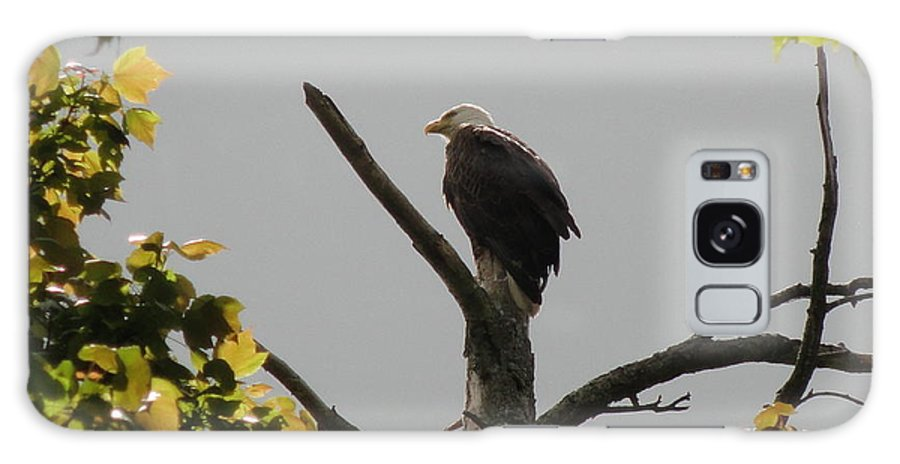 Spring Galaxy S8 Case featuring the photograph Spring Eagle I by Daniel Henning