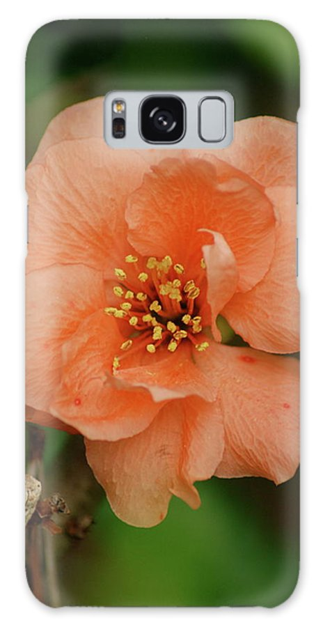 Orange Flower Galaxy S8 Case featuring the photograph Spring Is Near by Kathy Gibbons