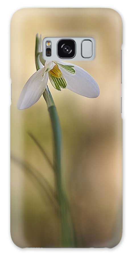 Flower Galaxy S8 Case featuring the photograph Spring Messenger by Annie Snel