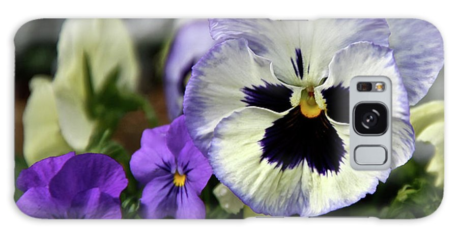 Pansy Galaxy S8 Case featuring the photograph Spring Pansy Flower by Ed Riche