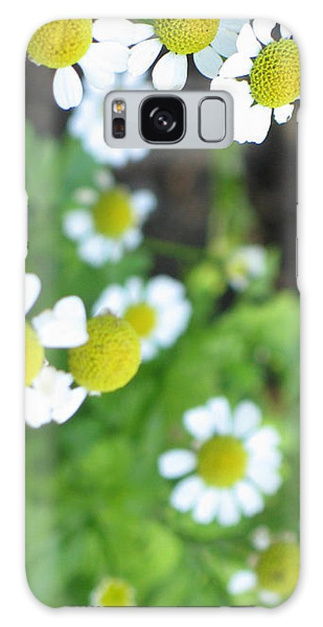Spring Galaxy S8 Case featuring the photograph Spring Time by Ria Razzauti