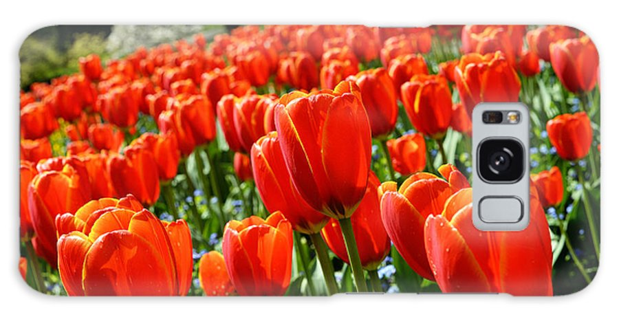 Tulips Galaxy S8 Case featuring the photograph Spring Time Tulips 3 by Terry Elniski