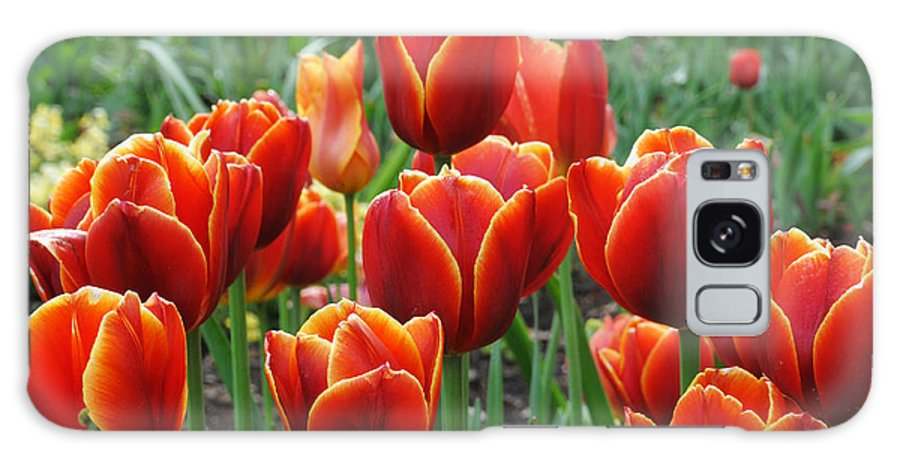 Tulip Galaxy S8 Case featuring the photograph Spring Tulips by Lynn Bauer