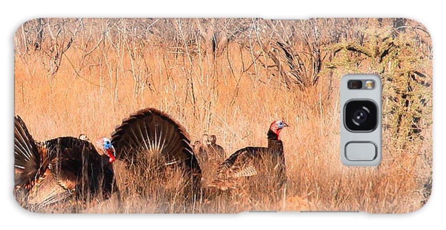 Wild Turkey Galaxy S8 Case featuring the photograph Spring Turkeys by Mark Short