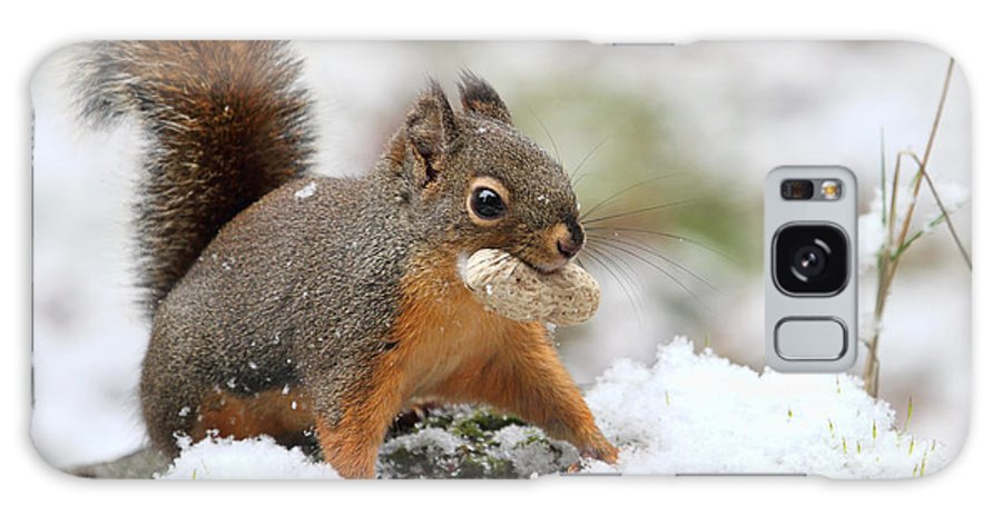 Squirrels Galaxy S8 Case featuring the photograph Squirrel In Snow by Peggy Collins
