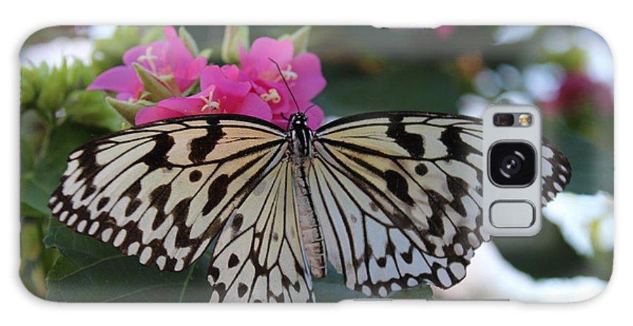 Butterfly Galaxy S8 Case featuring the photograph St. Louis Zoo Butterfly by Jeffrey Ikemeier