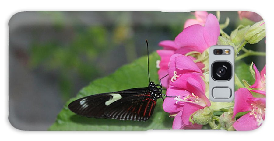 Butterfly Galaxy S8 Case featuring the photograph St. Louis Zoo Butterly by Jeffrey Ikemeier