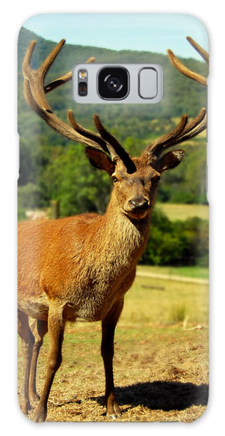 Stag Galaxy S8 Case featuring the photograph Stag by Glen Johnson