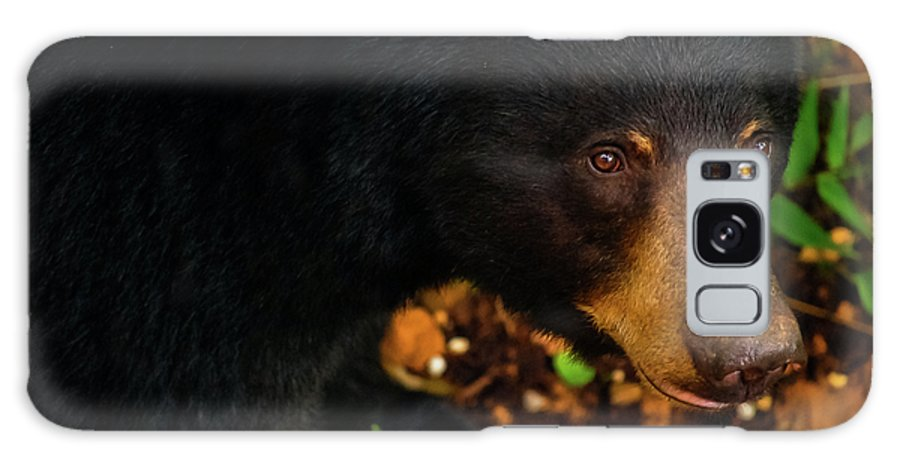 American Black Bear Galaxy S8 Case featuring the photograph Stalker by Christi Kraft