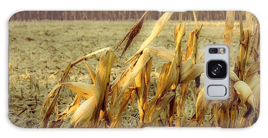Corn Stalks Galaxy S8 Case featuring the photograph Standing Alone by Brett Beaver