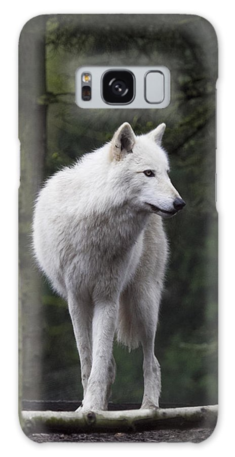 Wolf Galaxy S8 Case featuring the photograph Standing Guard by Elvira Butler